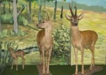 Muzeum Przyrodnicze BdPN w Ustrzykach Dolnych